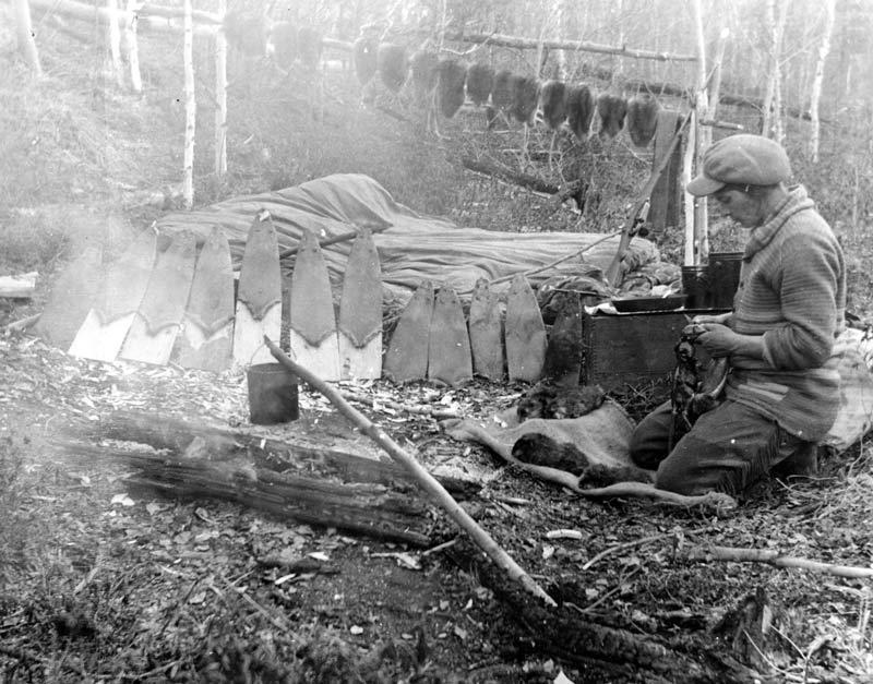 Historical photo of a trapper prepping muskrat pelts near Cree Lake, Saskatchewan.