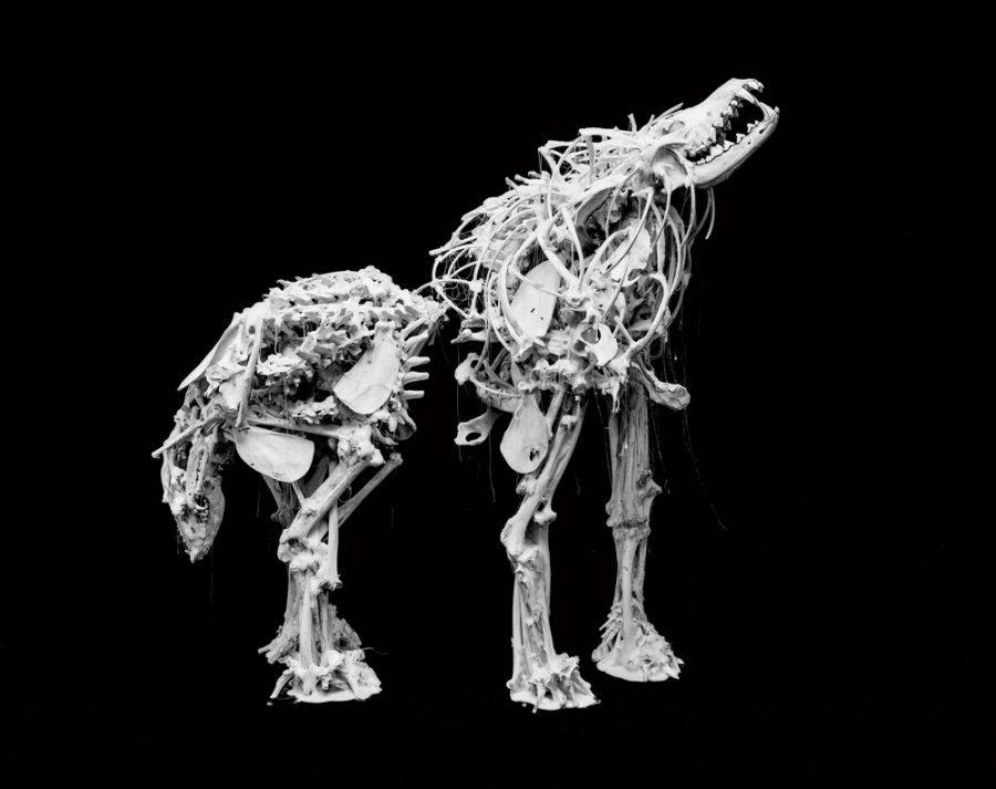 """Métis artist Edward Poitras' """"13 Coyotes"""" piece."""